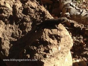 lizard in big sur