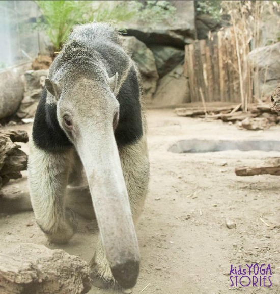 Anteater picture from zoo animal poses for kids on Kids Yoga Stories