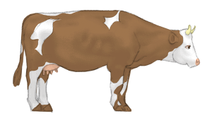 Cow image to match Cow Pose | Kids Yoga Stories