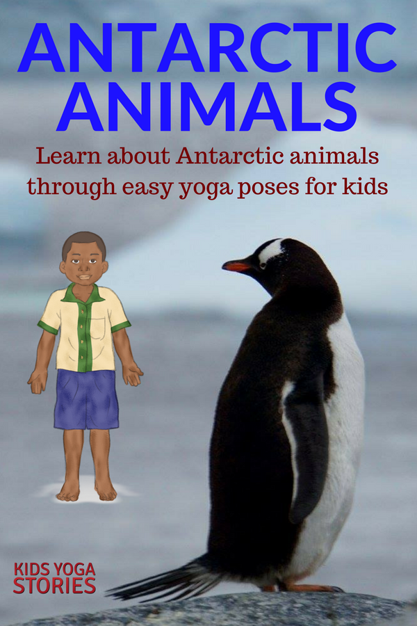 antarctic animals for kids - photo #21