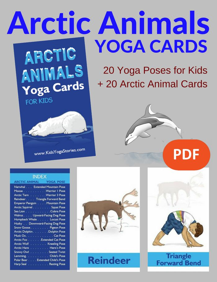 Arctic Animals Yoga Cards PDF Download Image