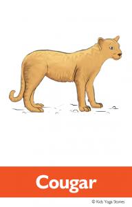 North American Animals Alphabet Yoga Cards - Cougar | Kids Yoga Stories